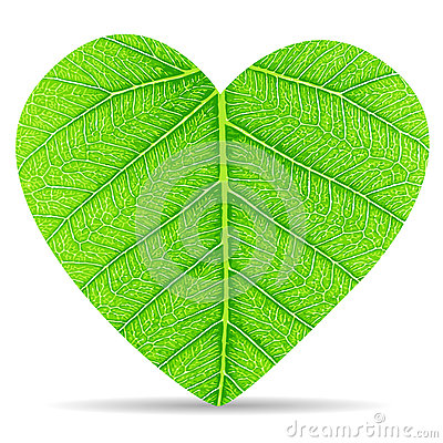 Heart green leave