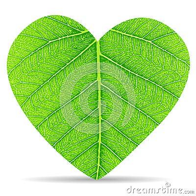 Heart green leave