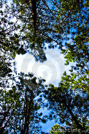 Free Heart In The Sky Royalty Free Stock Image - 4622906