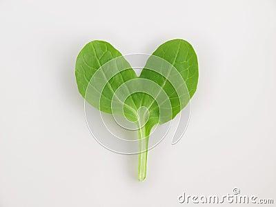 Heart pino green