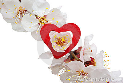 Heart on sakura