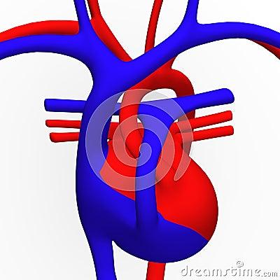 Heart scheme