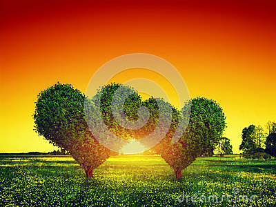 Heart shape trees couple on grass at sunset. Love