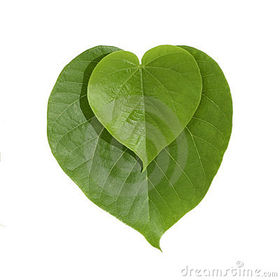 Heart shaped green leaves