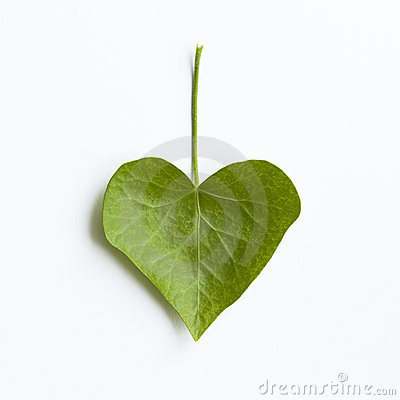 Free Heart-shaped Ivy Leaf Stock Photography - 21413362
