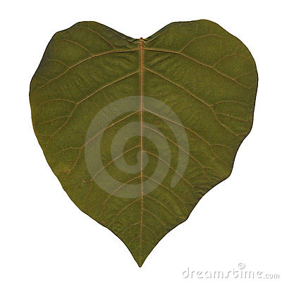 Heart shaped leaf