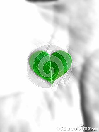 Free Heart-shaped Leaf Stock Photos - 96297413