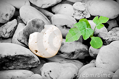 Heart-shaped stone and little plant