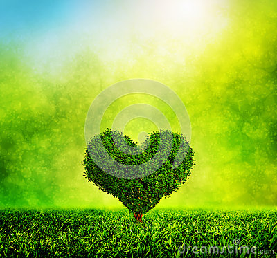 Heart shaped tree growing on green grass. Love Stock Photo