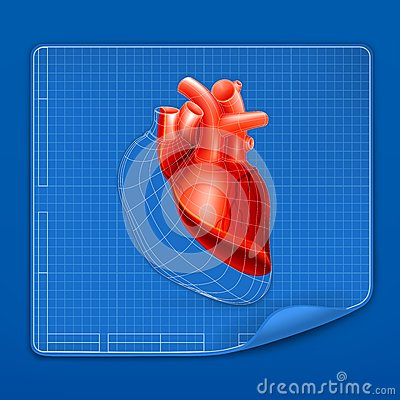Heart structure blueprint
