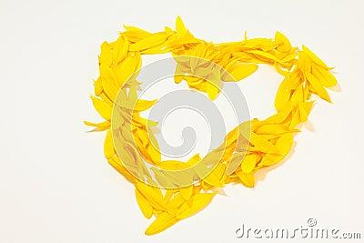 Heart of sunflower petals