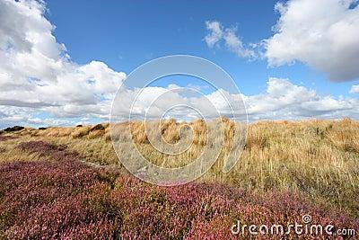 Heath in New Zealand