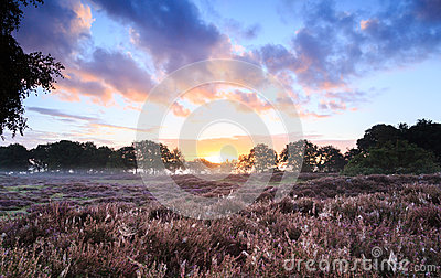 Heath Sunrise Stock Photography 60192284