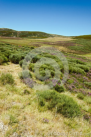 Heather in the Hills