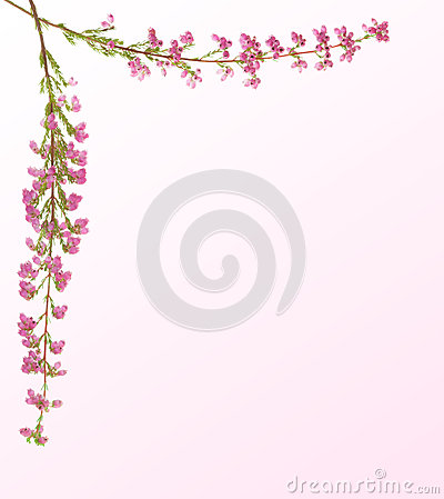 Heather sprig with pink flowers