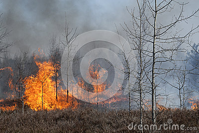 Heathland forest in fire