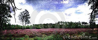 Heathland panorama