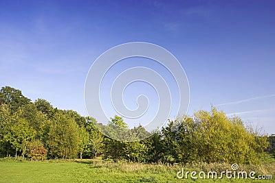Heathland Treeline