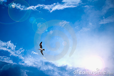 Heavenly bright blue sky with sun rays and bird