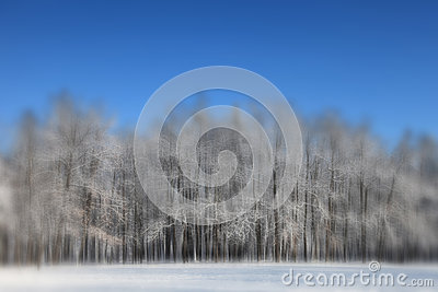 Heavy blurred winter forest scene