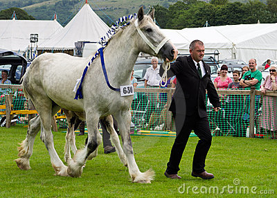 Heavy Horse Cartmel Show 2011 Editorial Image