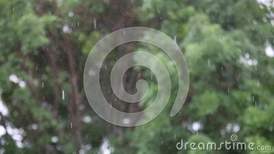 Heavy Rain Falling Before Windy Background Trees stock video footage