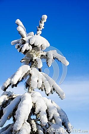 Free Heavy Snow Royalty Free Stock Photography - 1844187