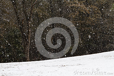 Heavy Snow Fall In A Forest Clearing