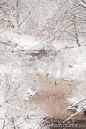 Heavy snowfall over a creek