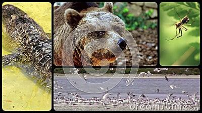 Hedersgåva till vilda djur lager videofilmer