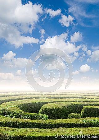 Hedge maze problem solving