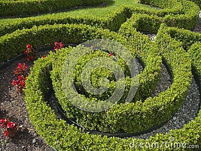 Hedge shaped skilful