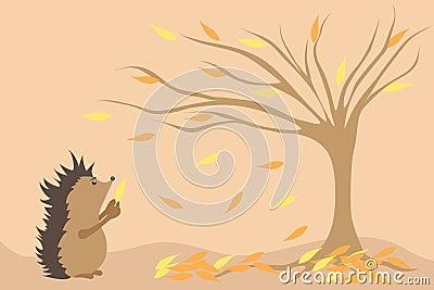 Hedgehog and autumn