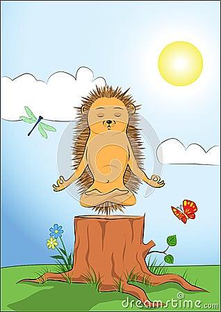 Hedgehog doing yoga-meditation
