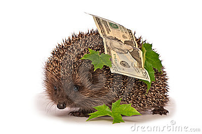 Hedgehog with dollars profit