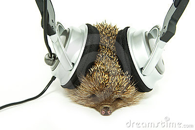 Hedgehog in headphones