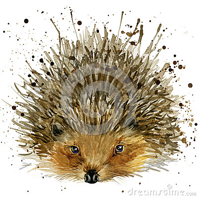 Free Hedgehog Illustration With Splash Watercolor Textured Background Royalty Free Stock Photography - 55348407