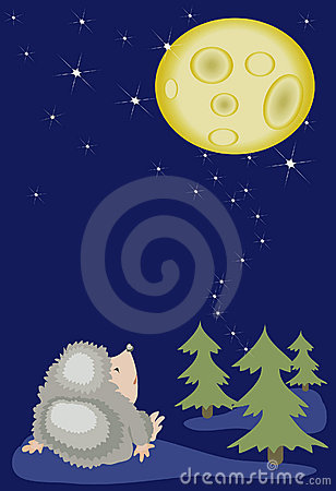 Hedgehog looks on the moon.