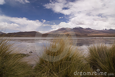 Hedionda laguna της Βολιβίας