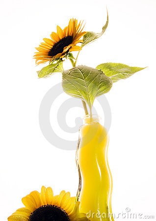 Free Helianthus Royalty Free Stock Photography - 1987897
