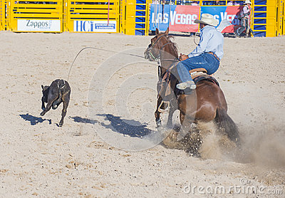 Helldorado days rodeo Editorial Stock Image