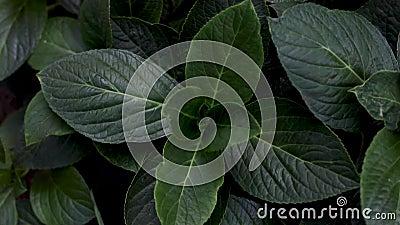 Helle Waldgrüne im Park Hintergrund mit ungewöhnlichem Pflanzenblättern stock video footage