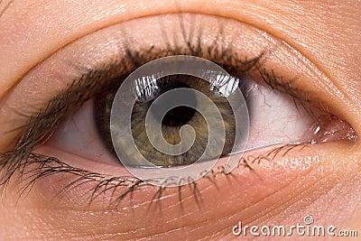Hellgrünes Auge mit langen Peitschen
