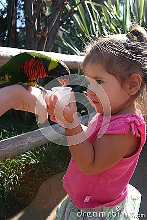 Free Hello Birdie. Royalty Free Stock Photos - 268728