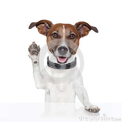 Free Hello Goodbye High Five Dog Royalty Free Stock Photo - 26693145