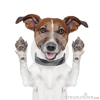 Free Hello Goodbye High Five Dog Stock Photo - 26906260