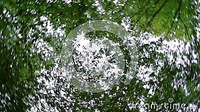 hemel met bomen in een 360 draaiende effect, natuurachtergrondvideo met psychedelisch effect stock video