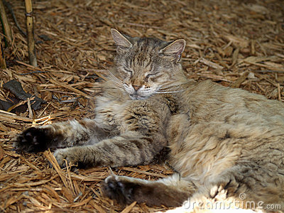 Hemingway s cat in Key West
