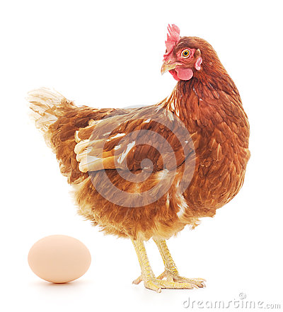 Free Hen And Egg Royalty Free Stock Photos - 42135548