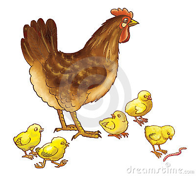 The hen with chickens